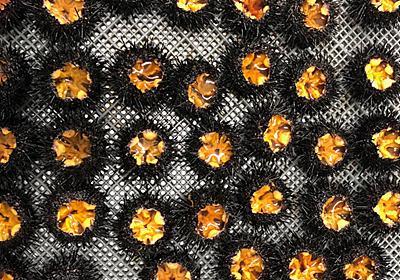 海藻食べ尽くす厄介者をおいしい食材に 「ウニノミクス」の挑戦:日経ビジネス電子版