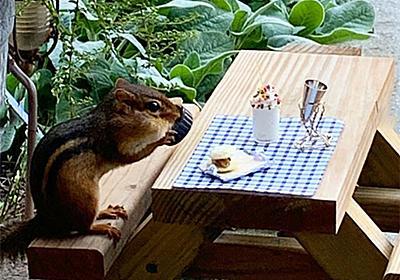 ようこそ小さなお客様。シマリスのための小さなレストランをオープン(アメリカ) : カラパイア