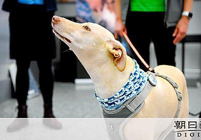 コロナ感染の有無かぎ分ける空港犬 PCR検査より早い [新型コロナウイルス]:朝日新聞デジタル
