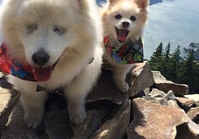 【最強の2匹】盲目のワンコ&お助けワンコの美しき友情に思わず笑顔! 2匹で色々な場所を旅しているんだぞー!!   ロケットニュース24