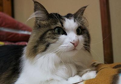 猫のひげって何のためにあるの?【優秀なひげセンサー】 | ヒメとまいにち