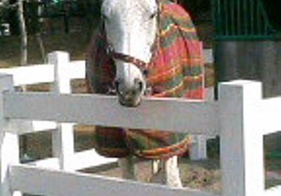 """LPI@三陸産めかぶがマイブーム on Twitter: """"ラニに喧嘩を売った馬、ヒルノダムールの下だった。"""""""