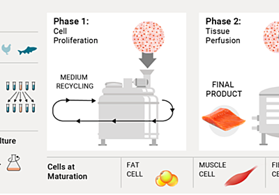 How it's made: the science behind cultivated meat — A Bit of Science