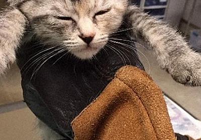 札幌女児衰弱死 猫13匹を母親宅で保護 交際相手宅でも8匹 ガリガリに痩せ数匹治療中 保護団体 - 毎日新聞