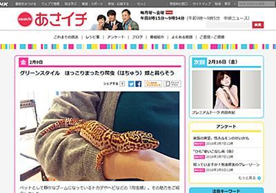 新垣結衣も飼っている!? NHK「あさイチ」の爬虫類特集に反響の声続出! | GetNavi web ゲットナビ
