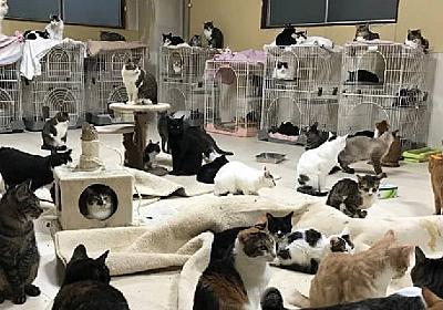 猫の保護団体で多頭飼育崩壊、元ボランティア「治療も受けられず、死んでいく」涙の告発 - 弁護士ドットコム