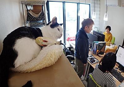 一緒に出勤、慶弔休暇も 令和の猫ワーキング  :日本経済新聞