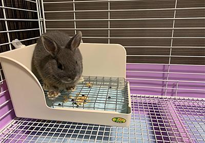 【ざつだん!】帰宅したら家にウサギがいる生活 - 日常にツベルクリン注射を‥