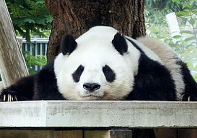 痛いニュース(ノ∀`) : 中国「パンダの契約終了な」 神戸市「何でもするのでそれだけはやめてください」 - ライブドアブログ