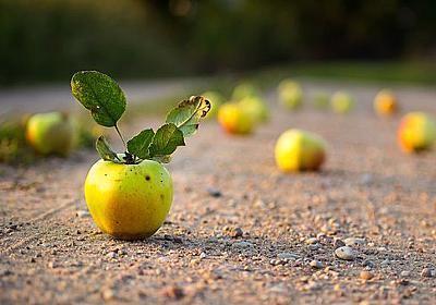 apple roadサポート始めます
