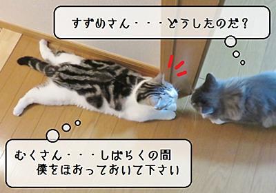 猫の病気 ~すずめの血液検査~ - 猫と雀と熱帯魚