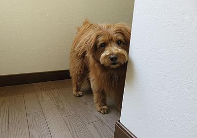 前回の「人に吠えてしまう犬」記事へのコメントのお礼 - こぐま犬と散歩〜元保護犬の漫画日記〜