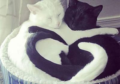寝ているネコの奇跡的な瞬間 19ショット - New's World