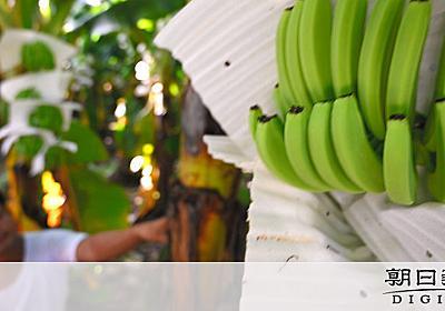 中国へ消えていくバナナ 農園拡大、住民の体には異変が:朝日新聞デジタル
