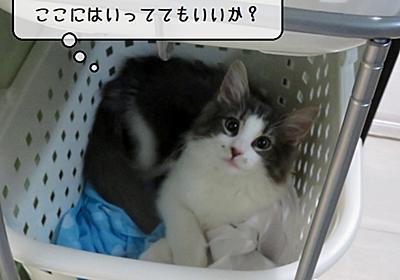 猫雑記 ~最近のお風呂タイムの猫様達~ - 猫と雀と熱帯魚