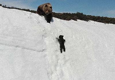 つるんつるん、何度も滑り落ちそうになりながら雪の斜面を必死に登ろうとするクマの子の懸命さに心が震える(ロシア) : カラパイア