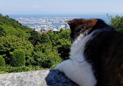 おとぎの国に迷い込んだみたい!(^日常から離れて..オーガニックなランチと神戸の景色とハーブに癒された一日。 - siran81's blog