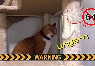 家の中で見つけたら強制退去する必要のある昆虫 | ヒヨリどんの猫日和II