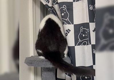 『地震は飼い主のせい』とお考えの猫さん、揺れが大きかったので尻尾にお怒りが出まくる「めっちゃイライラしてる」