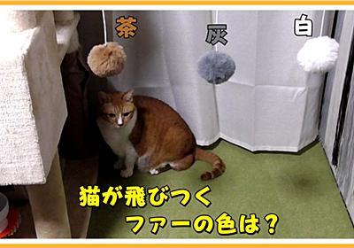 (我が家の)猫が好きな色のおもちゃを調べてみました | ヒヨリどんの猫日和II