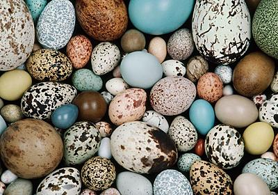 鳥の卵のカラフルさ、発祥は1.45億年前の恐竜 | ナショナルジオグラフィック日本版サイト