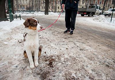茶色のエコな融雪剤はコーヒーかす、砂や塩の代わり ポーランド 写真14枚 国際ニュース:AFPBB News