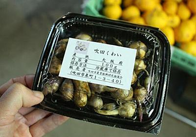 おせち料理の定番野菜、クワイの謎に迫る :: デイリーポータルZ
