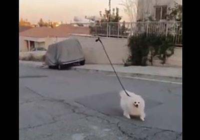 コロナ封鎖の街、ついにドローンを使って犬を散歩させる人まで登場! - switch news