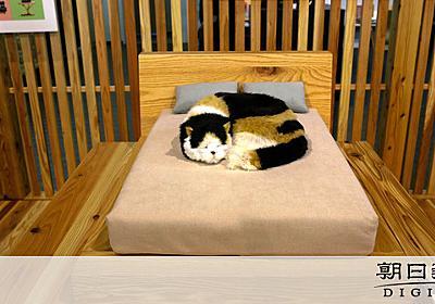「ネコ家具」爆売れ、家族だから 職人芸で精巧リサイズ:朝日新聞デジタル