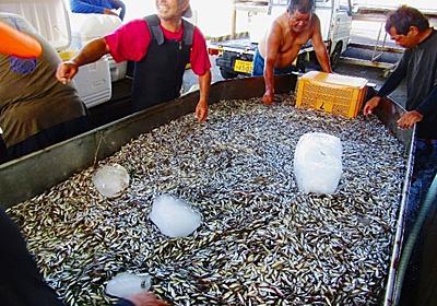 スク水揚げ「5年ぶりの大漁!」 地域の人たちも集まり歓声 沖縄・伊是名島 | 沖縄タイムス+プラス ニュース | 沖縄タイムス+プラス