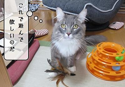 猫の道具 ~頭脳犯むく~ - 猫と雀と熱帯魚