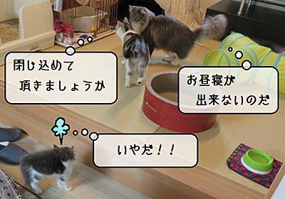 猫雑記 ~てんにてんてこまい~ - 猫と雀と熱帯魚