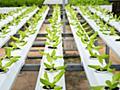 植物を「数秒ごとに明滅する照明」で育てることで栽培に必要なエネルギーを削減できる - GIGAZINE
