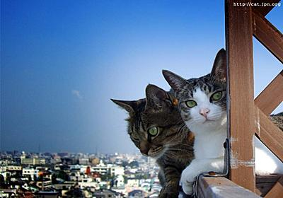 紐をたどれば奴がいる - The Cat who.... 猫のアイシス&ジェリー
