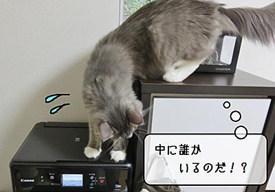 猫雑記 ~プリンターとむく~ - 猫と雀と熱帯魚