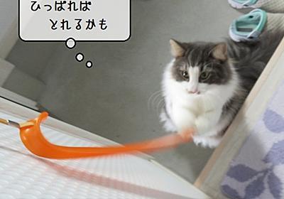 猫雑記 ~退屈しのぎをする猫様~ - 猫と雀と熱帯魚
