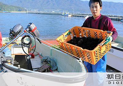挫折と海と温かい人、私は残った 東大研究者から漁師に:朝日新聞デジタル