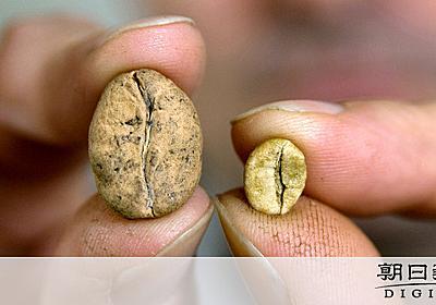 コーヒー野生種、6割が絶滅危機 英研究チームなど調査:朝日新聞デジタル