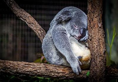 短時間睡眠(4時間)で継続した場合に、どのような症状になるかの実践結果