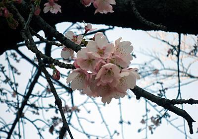 墨田区吾妻橋 確定申告の帰りに、下総屋でオムライスを食べました!!! - 涅槃まで百万歩