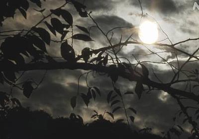 「自分のせいで周りに迷惑」 コロナ感染 自宅療養の女性が自殺 | 新型コロナウイルス | NHKニュース