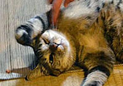 京都のディープスポット・ネコと飲める店「ネコ穴」 :: デイリーポータルZ