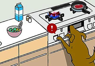 密室の出火、犬のしわざ? 前脚でコンロ「長押し」か:朝日新聞デジタル