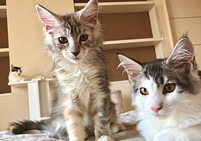 立川の猫カフェでパルボウイルス、麗の妹も死亡 | 猫10匹と暮らす、40代セミリタイア生活