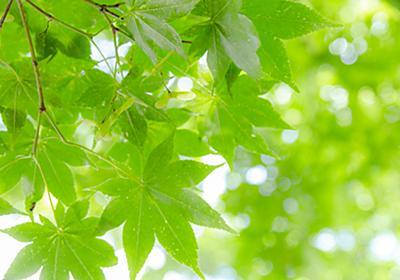 植物の葉の色はなぜ緑色か? - tsujimotterのノートブック