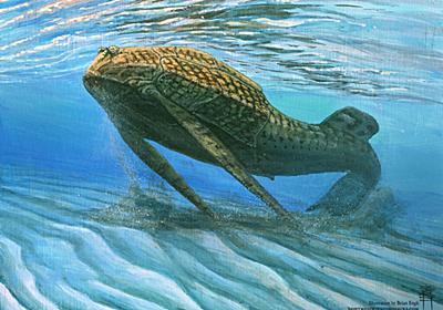 骨が「ミネラルの電池」に進化、4億年前の魚で証拠発見 | ナショナルジオグラフィック日本版サイト