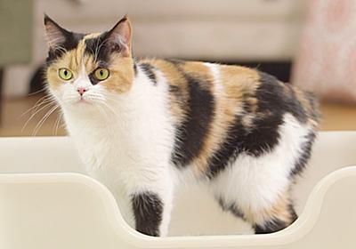 猫のオシッコで毎日の健康チェック!尿の回数・色・量の目安って? ライオン商事株式会社