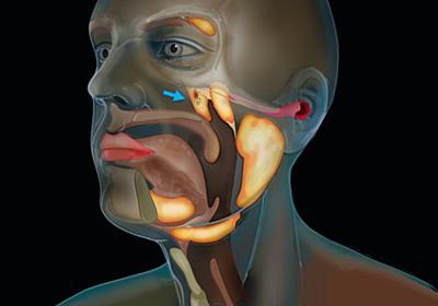 人間の喉の奥に「未知の臓器」を偶然発見。それは第4の唾液腺だった(オランダ研究) : カラパイア