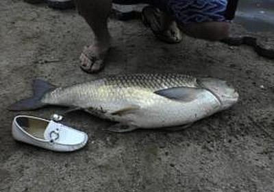 草魚を大濠公園で釣ってみた話