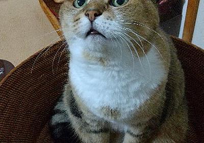 のせ猫は一日にしてならず。 - 続・猫とわたしの気まま日記。